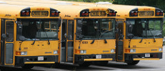 Image of 3 school buses parked in a row in a parking lot